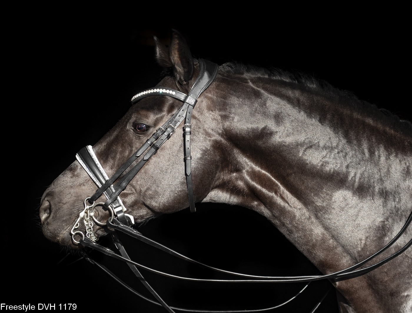 Bridle with beautiful details. Riding gear for your horse.