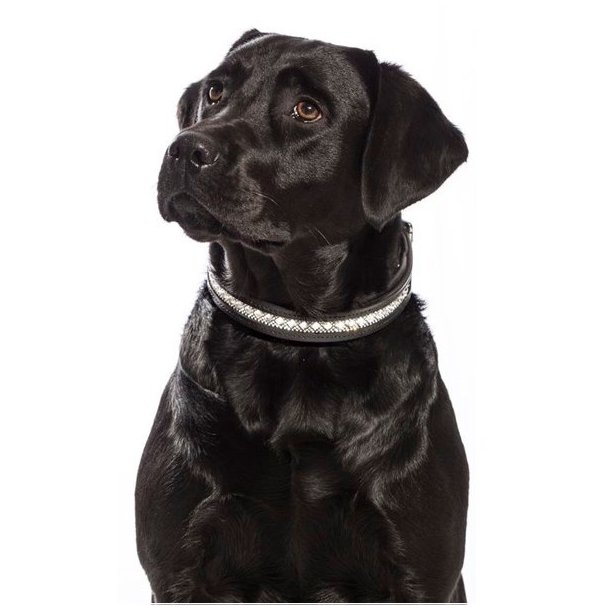 SD® Azzaro dog collar. Black/Crystal. T-100