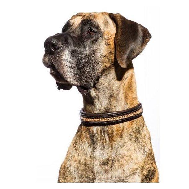 SD® Azzaro gel dog collar. Brown/Gold T-101
