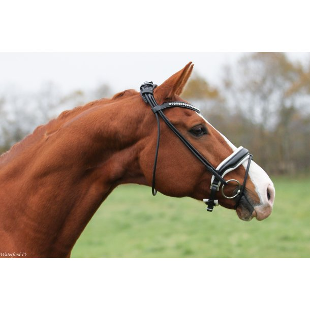 SD® CROWN Cantolar rolled bridle. Black/White. R-447
