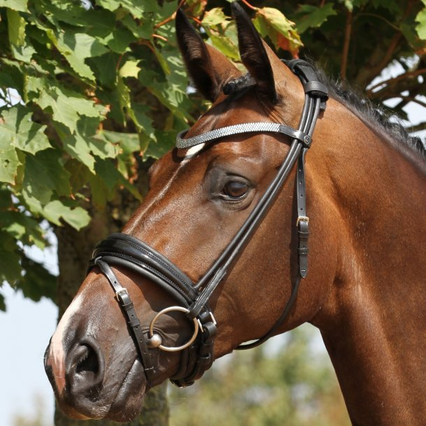 SD® CROWN Spot Light rolled bridle in black/black/patent. R-532