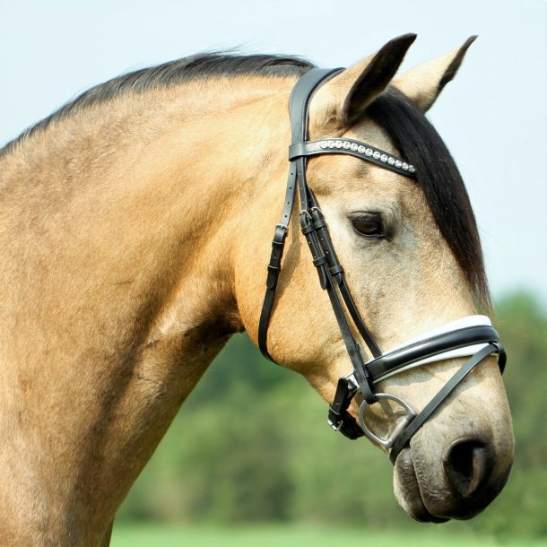 SD® CROWN Belissimo bridle in Black/White. R-741