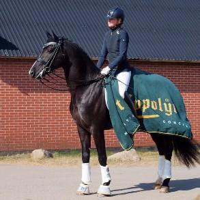 Ahlberg Performance Horses